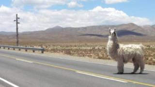 40474 chile28 - Saiba qual documentação levar para viajar de carro para Argentina e Chile