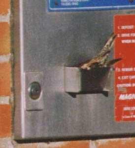 afcf4 passarinhosroubamdinheiro1 - O passarinho ladrão