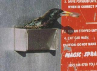 f3930 passarinho - O passarinho ladrão