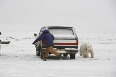 0095c image002 727148 - Grandes brigas entre homens e animais! Natureza...