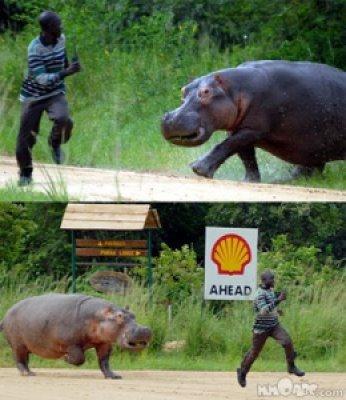 4d22b image007 731295 - Grandes brigas entre homens e animais! Natureza...