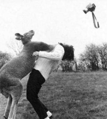57994 image015 737830 - Grandes brigas entre homens e animais! Natureza...