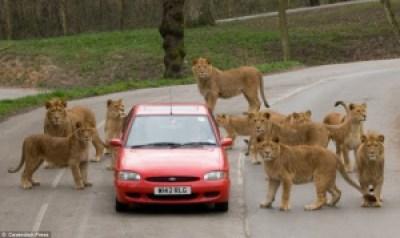 6b2d2 image006 730230 - Grandes brigas entre homens e animais! Natureza...