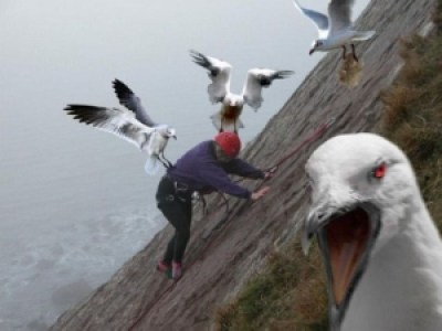 6f933 image001 725659 - Grandes brigas entre homens e animais! Natureza...