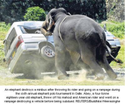 7beb3 image013 736387 - Grandes brigas entre homens e animais! Natureza...