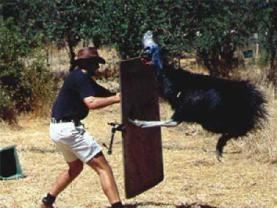 c6bb1 image004 728857 - Grandes brigas entre homens e animais! Natureza...