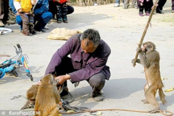 5e811 image009 732762 - Grandes brigas entre homens e animais! Natureza...Parte #2