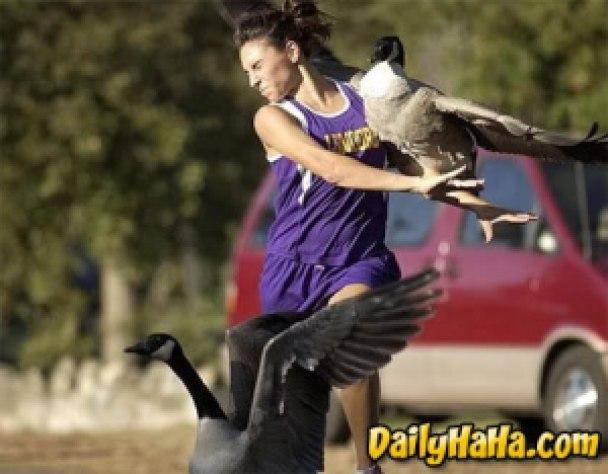 b3c56 image011 734519 - Grandes brigas entre homens e animais! Natureza...Parte #2