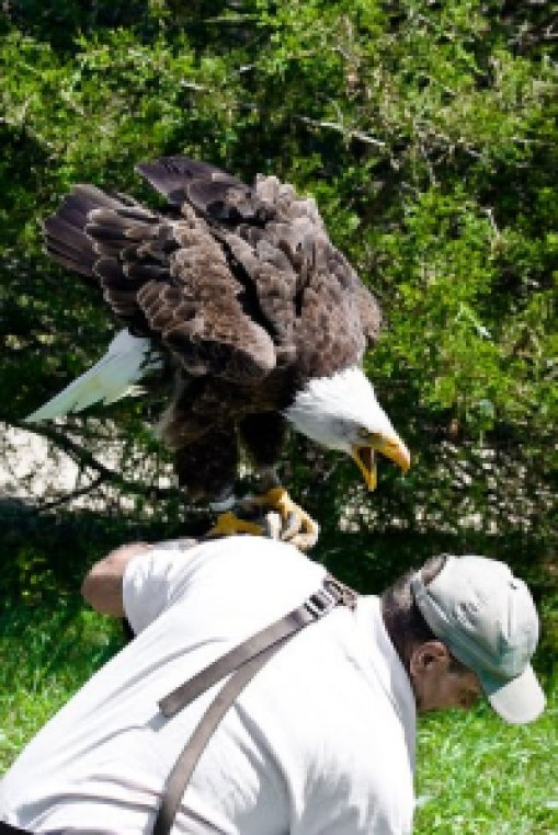 e3630 image012 735503 - Grandes brigas entre homens e animais! Natureza...Parte #2