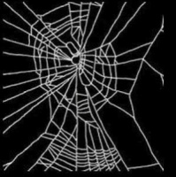8c631 benzedrina - Aranhas drogadas fazem teias malucas