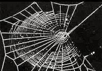 fc8bc mescalina - Aranhas drogadas fazem teias malucas
