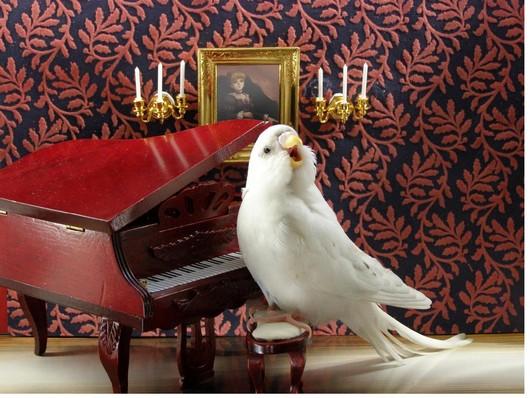 017c7 passarinho talented funny parakeet1 passarinho - Fotos: Periquitos Talentosos