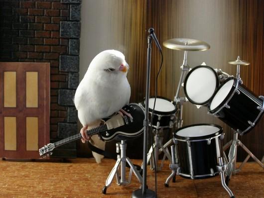 f1d53 passarinho talented funny parakeet3 - Fotos: Periquitos Talentosos