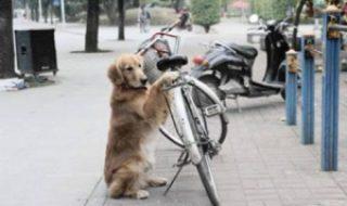 970ea cao cuida bicicleta amigo rua - Cão cuida da bicicleta de seu dono sem cessar