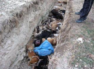5dca2 foto caes e gatos mortos euro ucrania - Para a Euro 2012 - Ucrânia manda matar cães e gatos