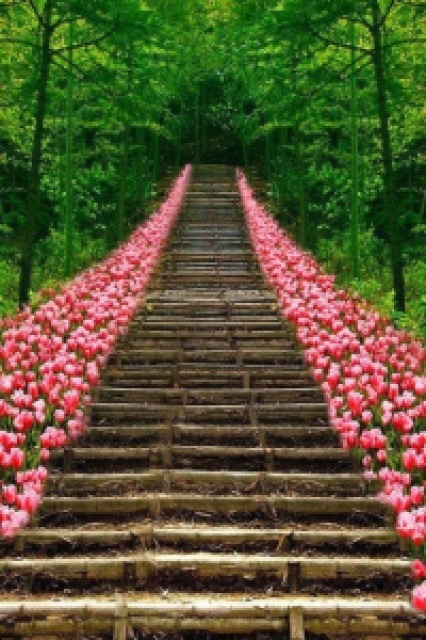65bfa path of pink tulips - Lugares maravilhosos de tirar o fôlego - Parte #01