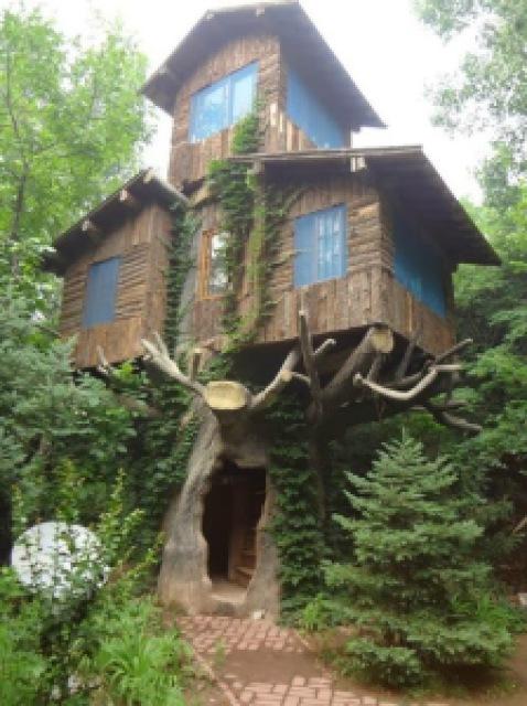 ceeec tree house marin california - Lugares maravilhosos de tirar o fôlego - Parte #01