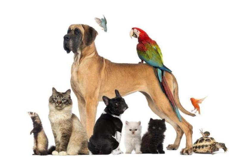 Brasileiros possuem mais cães que gatos