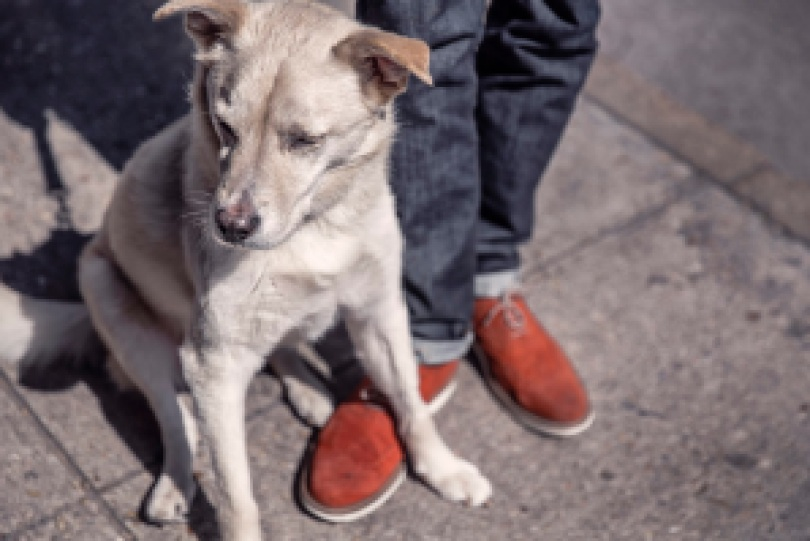 8baa6 295h - Cachorros sentem ciúmes? Pesquisas referente a inteligência canina